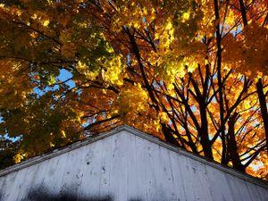 white garage, orange tree