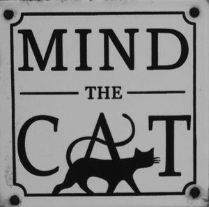Mind the Cat