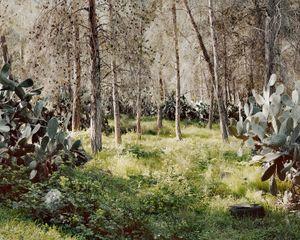 Pines and Sabres, Kula, 2013