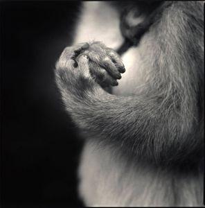 Fukunosuke's Hands, Suo Sarumawashi © Hiroshi Watanabe