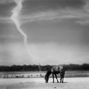 Low Tide, Salt Marsh © Anne Berry