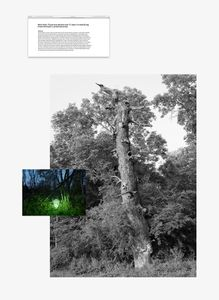 Hollow oak, Insect trap, research article, 2019