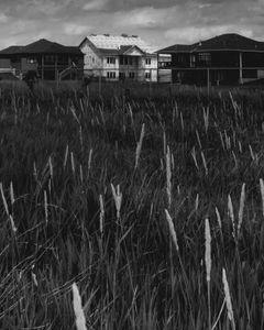 housing development as seen from marsh