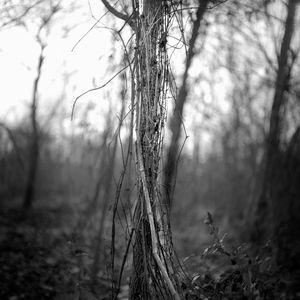 Pecan Grove, Rena Lara, MS 2010