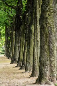 Trees lined up in Brussels, Belgium