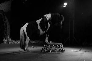 Circus Wiener