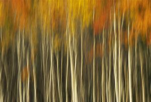 An Autumn Forest