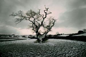 Neige, Derbyshire, Portraits of Trees