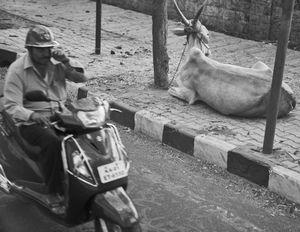 a cow's opinion. Bangalore (Bengaluru), 2017