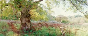"""Bell Field Oak. From the exhibition """"Landscapes"""" © Tom Wood"""