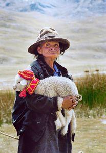 Pet, Peru