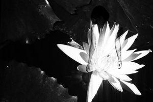 Flower#1, 2019