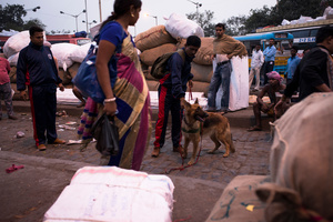 Mohan Mondal and Gypsy, with the Kolkata Police, at a busy bus terminus in Esplanade area, Kolkata.