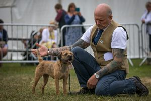 The working terrier class