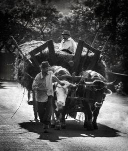 The Ox Wagon