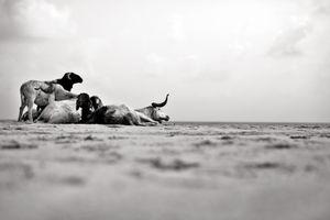 Shrinking Shores © Adolphus OPARA and Photoquai 2013