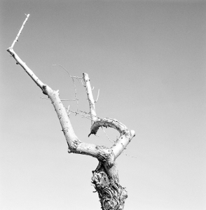 Dead Forest 1