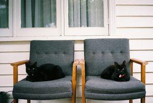 Salem Twins, Northcotw