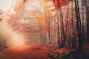 Memories of trees .8