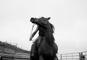 Nick Michelle herding cattle