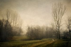 Memories of trees .6