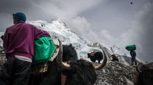 Waste and Yaks