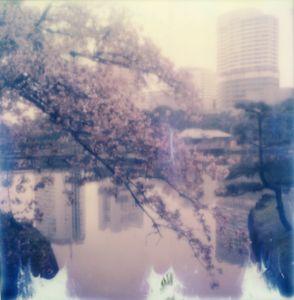 Tokyo Cherry Blossoms 10