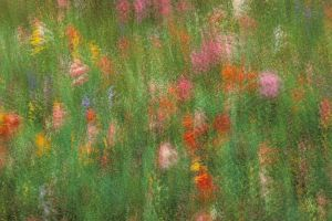Wildflowers in Summer Meadow