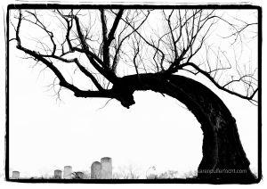 Kokopelli Tree