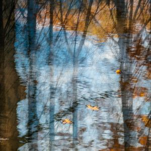 Woodland reflects