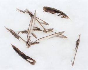 Feathers on snow, Piatra Craiului National Park [January, 2019]