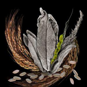 Rice Anther, Pollen, Husks