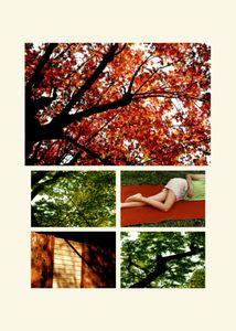 N°60 - Passage - Vert, le rouge - 2008.