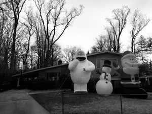 Winter Creatures, Bethesda, Maryland