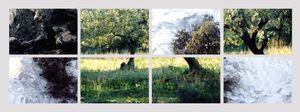 N°44 - On dirait le Sud - Olive Blanc - 2006.
