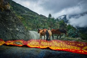 Wild horses on the road from Choquecancha to Lares, Cusco, Peru