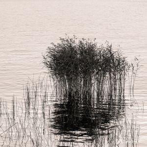 Killarney Grass