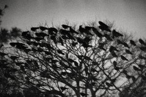 "Masahisa Fukase. Image from ""Ravens"" (MACK, 2017). Courtesy of Masahisa Fukase Archives and MACK"