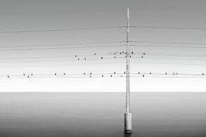 Song Birds © Jorge De La Torriente