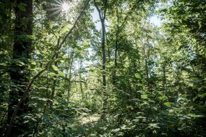 Joyful forest life light.