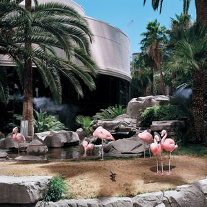 Flamingos Cooled by Mist Jets Outside of the Buffet