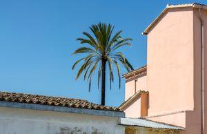 Palm Tree Skyline
