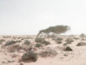 """Defensive position in an encroaching sandstorm, Alem Hamza Battlefield, Libya 