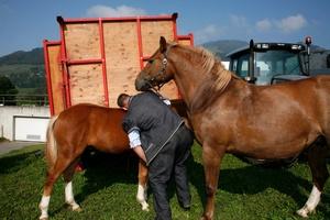 Après la délasse. Paysan avec ses chevaux, Charmey.