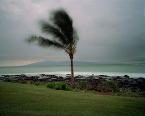 Palm Tree at Sunset © Meike Nixdorf