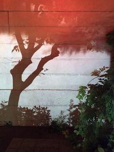 the dreamy tree