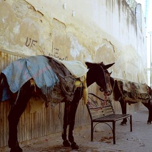 Donkeys in Fès, Morocco