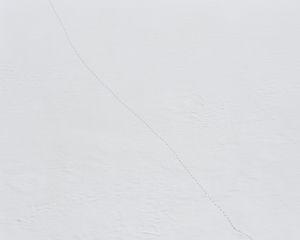 Animal tracks on a frozen Pecineagu Lake, Izvorul Dambovitei Hunting Area. [January, 2018]