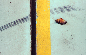 Moth and the line, 2010