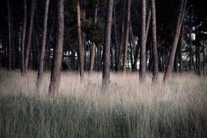 Little woods, 2009 © Andreas Tsonidis